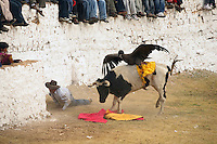 A matador lies on the ground as a wild condor rides attached to the back of a bull which is let loose around the bullring during the Yawar Fiesta in Coyllurqui in the Peruvian Andes on Independence Day. This celebration symbolises the clash between the indigenous people (represented by the condor) and the Spanish (represented by the bull). The condor is paraded around town, strapped on top of the bull, given alcohol, and finally set free.