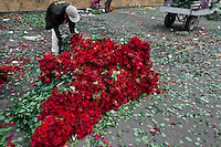 A Colombian street vendor makes a pile of low quality roses in the flower market of Bogota, Colombia, 10 July 2010. Colombia is one of the world leaders in cut flower industry. The advantage of the moderate sunny climate, very cheap labor force in combination with the absence of social laws and environmental regulations have created perfect conditions for the cut flower production. Flower growing is very fragile and necessarily depends on irrigation and chemical maintenance, provided by highly toxic pesticides. About 110.000 workers in Colombia, working mainly for living minimum wage, keep the floral industry going and saturate the market generated by consumerist culture the US, Canada and Europe.