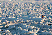 Scientist studying the Greenland ice sheet surface in summer.