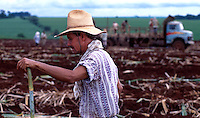 A Brazilian field worker pauses to rest with a stalk of sugar cane as he plants a new crop. Brazil.