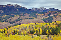 Fall colors in Swan Valley Idaho