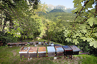 Switzerland. Canton Ticino. Arogno. Hives from the beekeeper Alberto Bianchi, an organic farmer (with the label Bio Suisse). Beekeeping (or apiculture) is the maintenance of honey bee colonies, commonly in hives, by humans. A beekeeper (or apiarist) keeps bees in order to collect honey and other products of the hive (including beeswax, propolis, pollen, and royal jelly). 30.05.12 © 2012 Didier Ruef