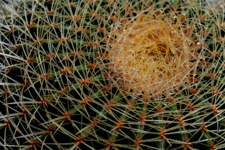 Macro detail of a cactus, with concentric rings of spines on the green plant.
