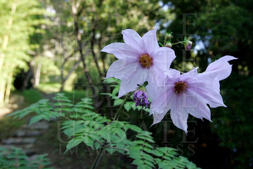 I giardini botanici Hanbury sul promontorio della Mortola, presso Ventimiglia.<br /> Villa Hanbury's botanic garden on the Mortola peninsula, near Ventimiglia.<br /> UPDATE IMAGES PRESS/Riccardo De Luca