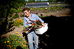 Suzanne Ashworth harvests rhubarb at Dell Rio Botanical in West Sacramento, CA May 3, 2010.