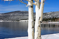 24 February 2008: Tree with west facing snow and view of the lake after a late winter storm in Lake Tahoe, Truckee Nevada California border in the Sierra Mountains.