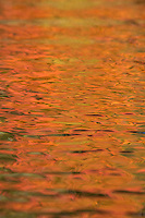 &quot;Fall Color Abstracts III&quot;<br />