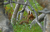 Ptarmigan is popular hunting objects. The picture is taken in august, about one month until the hunting season starts.
