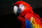 Macaws and Toucans, Mexico and Central America