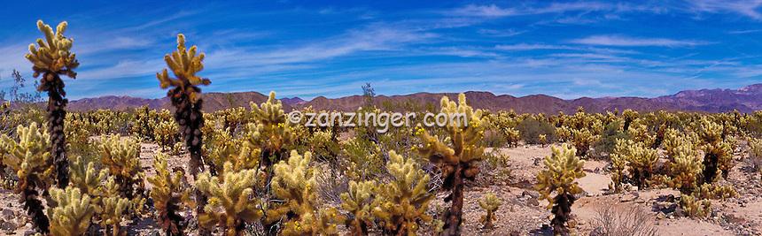 Cholla, Cactus,  Panorama, Joshua Tree, National Park, Desert, hiking, great walks, biking, rock climbing, CGI Backgrounds, ,Beautiful Background