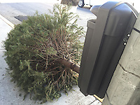 Quer&eacute;taro, Quer&eacute;taro. 5 de enero de 2016.- Un &Aacute;rbol de navidad luce tirado en la calle despu&eacute;s de haber servido como adorno en el mes pasado durante las festividades de la Navidad 2015.<br /> <br /> Como otras ocasiones expertos en ecolog&iacute;a y conservaci&oacute;n recomiendan que este tipo de accesorios festivos sean depositados en los centros de reciclaje o esperen el transporte de basura adecuado.<br /> <br /> Foto: Demian Ch&aacute;vez