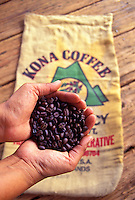 Hands holding Kona coffee beans with bag in background at the Mauna Loa Coffee Mill and Museum, Captain Cook, Hawaii