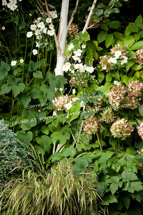 A mixed planting bed of perennials offers textural contrast in this Seattle backyard.