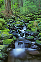 Cascading stream along Sol Duc Falls Trail; Olympic National Park, Washington..