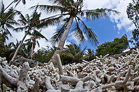Broken coral is collected and cooked to create lime that is chewed with betel nut to amplify the effect.  Betel is chewed partly for cultural reasons (like smoking) but it also acts as a mild stimulant and appetite suppressant, Yap Micronesia (Photo by Matt Considine - Images of Asia Collection)