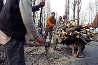 Poor wood collectors collect wood from the forest to sell them in the market for their earning. The Militancy has disrupted the tourism based economy of Kashmir, Way to the strategic town of Uri. Kashmir valley, India.