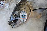 chinook salmon, naturally raised