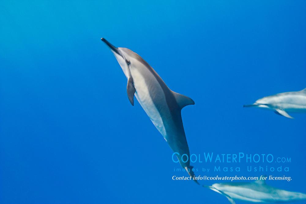 Kealakekua Bay Dolphins
