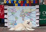 """Hensley, a pomeranian, poses for a photo in front of a """"Dogs from Around the World"""" poster at the International Street Fair on Saturday April 15, 2017. Photo by Kaitlin Owens"""