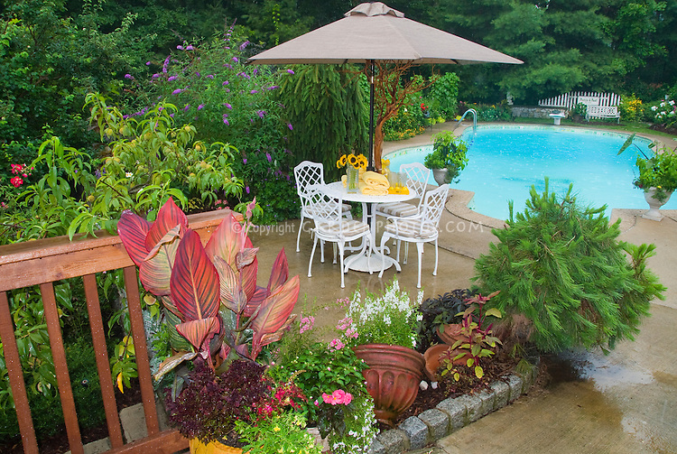 Pretty plants around the pool garden and outdoors for Gardens around pools