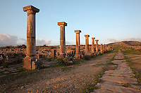 The Decumanus Maximus or Main Street, with the Ionic columns of the Forum or marketplace and stone slabs covering the sewers, Volubilis, Northern Morocco. Volubilis was founded in the 3rd century BC by the Phoenicians and was a Roman settlement from the 1st century AD. Volubilis was a thriving Roman olive growing town until 280 AD and was settled until the 11th century. The buildings were largely destroyed by an earthquake in the 18th century and have since been excavated and partly restored. Volubilis was listed as a UNESCO World Heritage Site in 1997. Picture by Manuel Cohen