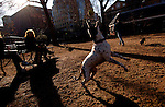 Elizabeth Bernard's mut, Mae, jumps for a tennis ball  Thursday, Jan. 12, 2006 at George's Dog Run in Washington Square Park in New York. Temperatures in New York are expected to top an unseasonably high 60 degrees Thursday.
