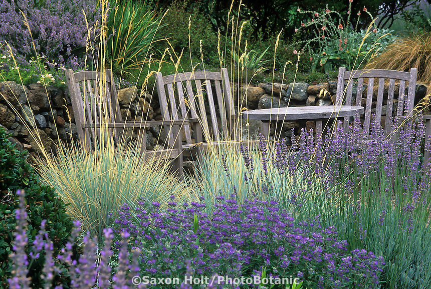 Sitting area by stone retaining wall in California garden with Helictotrichon sempervirens (Blue Oat Grass), Lavender, and Caryopteris.