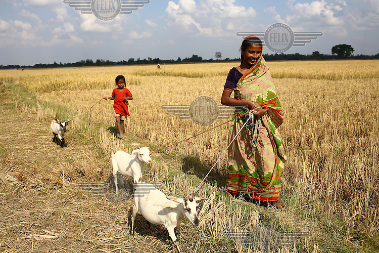 30 year old Norokul Begum with her goats she was able to buy thanks to a microfinance loan from IFAD (International Fund for Agricultural Development)...