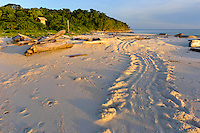 Turtle tracks on a beach, Sangalaki, Kalimantan, Indonesia. The island is an important nesting site for green turtles. Sangalaki is part of the Derawan Island group, off East Kalimantan.  The island is famous for its reefs, manta rays and cuttlefish, and as an important nesting site for the endangered green turtle.  Sangalaki was a popular tourist destination, until the Indonesian government closed down access to the island in 2009.