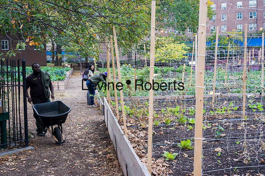 Crops growing at the Red Hook Houses urban farm in Brooklyn in New York on Saturday, October 19, 2013. The 1 acre farm is located within NYC Housing Authority's Red Hook Houses housing project and provides fresh produce as well as job training and education for the residents. (© Richard B. Levine)