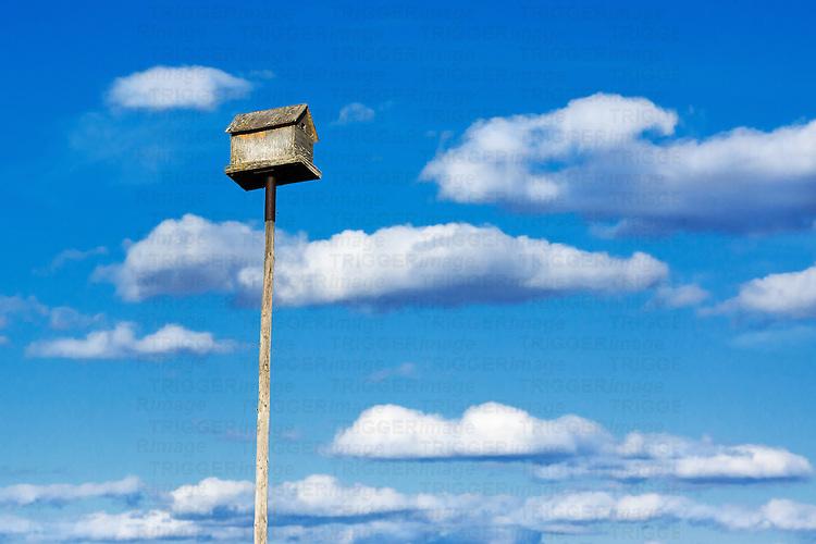 Birdhouse on a tall pole.