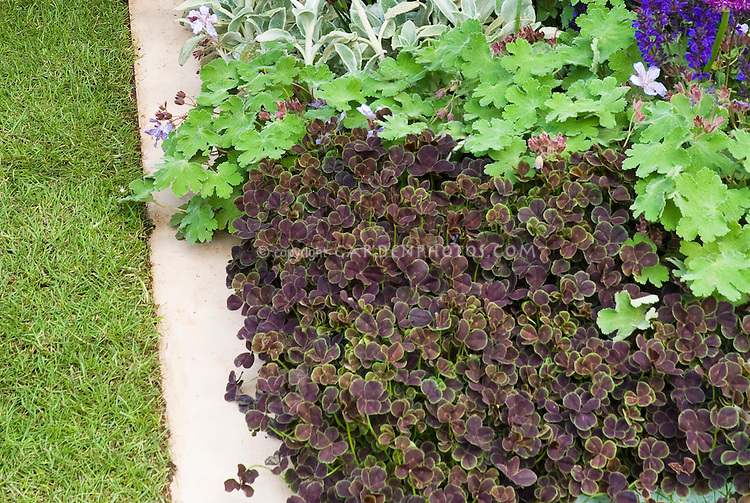 ... , Veronica in border edged with stone pavers for easy lawn mowing