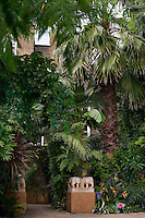 The garden is unusual for London in that it is planted with tall palms and exotic shrubs