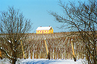 Tarcal in Tokaj: in the vineyard the famous yellow house owned by Hugh Johnson, a pioneer of the revival of Tokaj Credit Per Karlsson BKWine.com