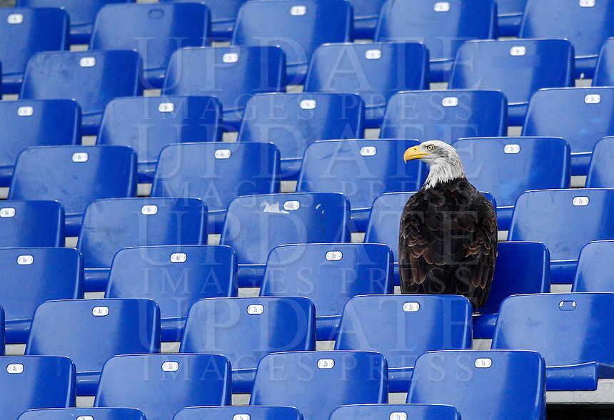 Calcio, Serie A: Lazio vs Napoli. Roma, stadio Olimpico, 18 gennaio 2015.<br /> Lazio's mascot Olimpia the eagle is perched on the stand prior to the start of the Italian Serie A football match between Lazio and Napoli at Rome's Olympic stadium, 18 January 2015.<br /> UPDATE IMAGES PRESS/Riccardo De Luca