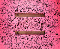 BAR MAGNET FIELDS: OPPOSITE POLES ATTRACT (2 of 2)<br /> Iron Filings Trace The Magnetic Field.Showing magnetic attraction between aligned opposite poles.