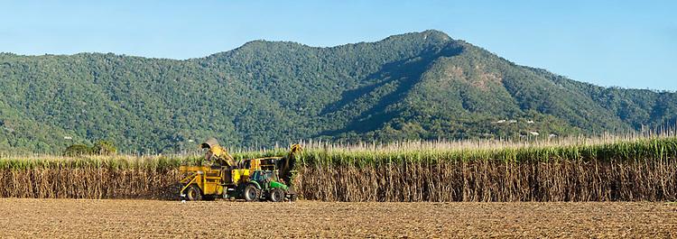 Mechanical harvesting of sugar cane near Cairns, Queensland, Australia