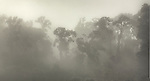 Fog in native forest near Paringa. Westland Region. New Zealand.