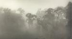 Fog in native forest near Paringa. Westland Region. New Zealand.
