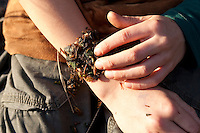 Gewöhnlicher Beinwell, der Brei aus kleingeschnittenen und zerriebenen Blättern und Wurzeln wird auf eine Wunde aufgebracht, wirkt heilend, Symphytum officinale, Common Comfrey, Consoude officinale