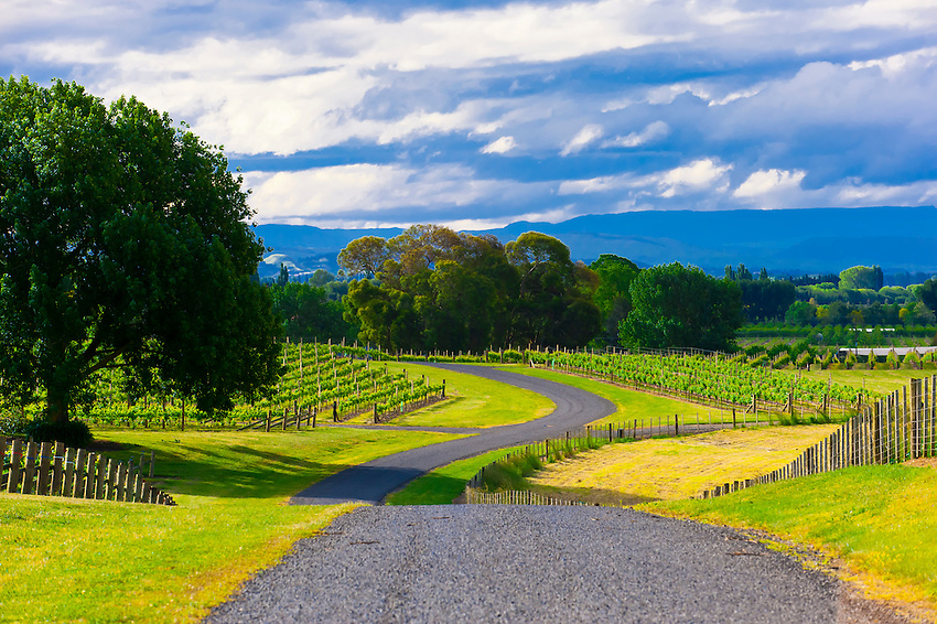 Vineyards, Te Awanga coast, near Napier, Hawkes Bay, north island, New Zealand
