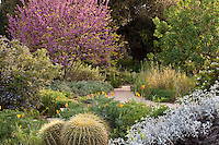 California Native Plants and Garden