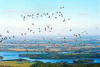 Biosph&auml;renreservat Schaalsee Kraniche im Aufwind: EUROPA, DEUTSCHLAND,  Mecklenburg- Vorpommern 06.10.2008: Biosphaerenreservat Schaalsee Kraniche im Aufwind,<br /> Als Tafelsilber der Deutschen Einheit bezeichnete der damalige Umweltminister Dr. Klaus T&ouml;pfer die f&uuml;nf Nationalparke, sechs Biosph&auml;renreservate und drei Naturparke, die 1990 durch die erste frei gew&auml;hlte DDR Regierung ausgewiesen und mit dem Einigungsvertrag in Bundesdeutsches Recht &uuml;bernommen wurden. Auch die einmalige Kulturlandschaft am Schaalsee wurde damals, zun&auml;chst als Naturpark, unter Schutz gestellt. Im Jahre 2000 wurde die mecklenburger Schaalseelandschaft durch die UNESCO als Internationales Biosph&auml;renreservat  ausgewiesen.<br /> Luftaufnahme, Luftbild,  Luftansicht