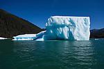 Icebergs in LeConte Bay, Inside Passage, Alaska, USA