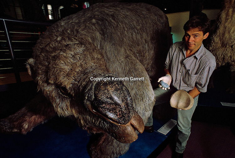 Marsupial called a diprotodon, 60000 years ago, Auastralia, Sydney, Australian Museaum, Richard Fullagar holds a new grinding stone and an old fragment