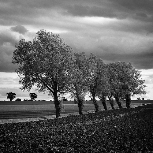 Walsham Le Willows, Suffolk, 2009 by Paul Cooklin