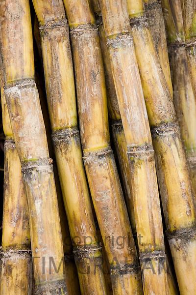 Bamboo canes, Guilin, China