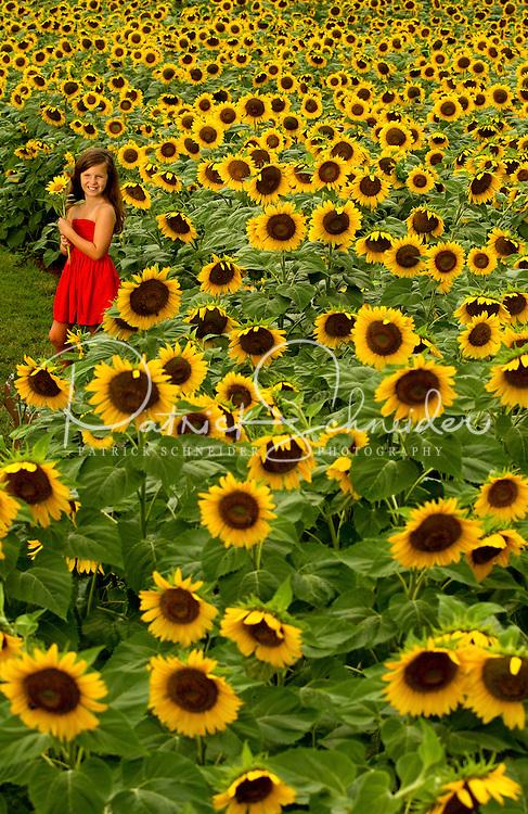 Charlotte Field of Dreams annual sunflower field photoshoot for ... Arnold Schwarzenegger