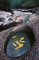 "Australia, Queensland, ""The Boulders""; River in sub tropical rain forest"