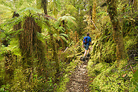 Walking track through moss and lichen covered rainforest in Oparara Valley and hiker, Kahurangi National Park, West Coast, Buller Region, New Zealand